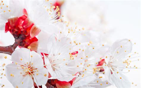 wallpaper flower petal flower petals hd hd desktop wallpapers 4k hd