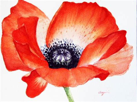 saatchi art poppy seed flower watercolor painting painting by mahsa watercolor