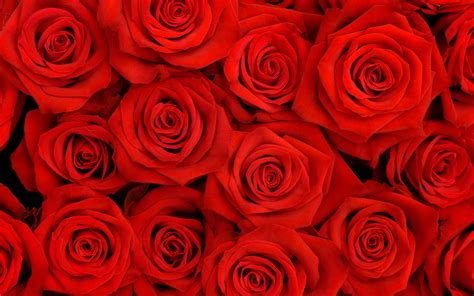 S Day Bouquet by S Day Bouquets Shopswell