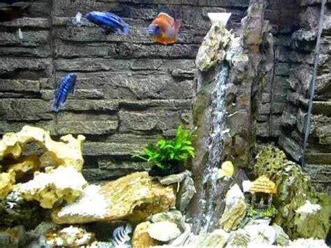 tanganyika cichlid malawi cichlid underwater waterfall