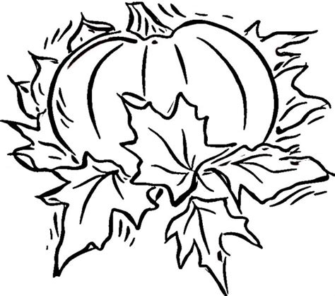blank coloring sheets free printable pumpkin coloring pages for