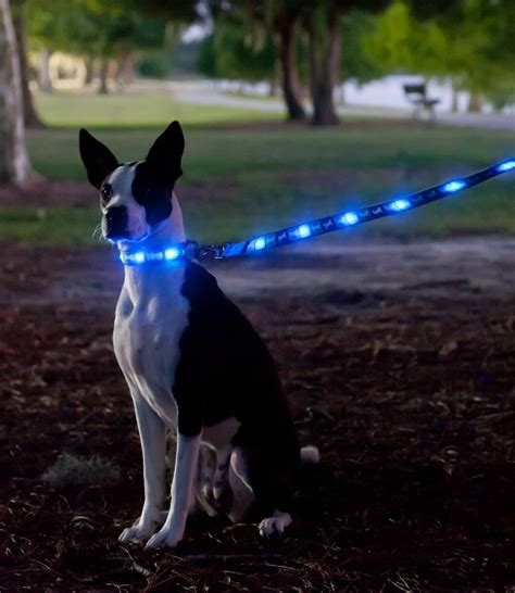 dog backyard leash dog e glow collars and leashes