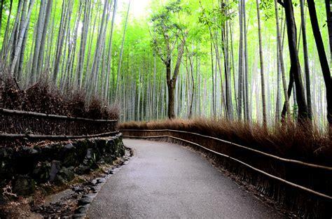 Bamboo : Samaya's Eco Flooring   EcoWoodFloor.com