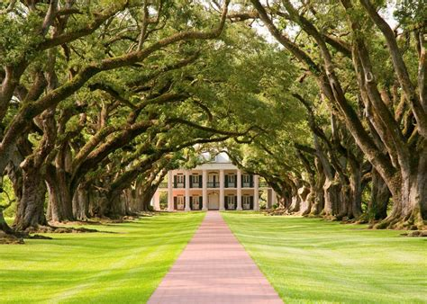 oak alley plantation new orleans plantation country discovering the old south audley travel