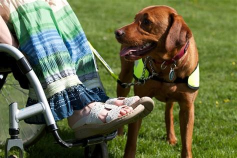 assistance dogs assistance dogs international assistance dogs international setting standards for