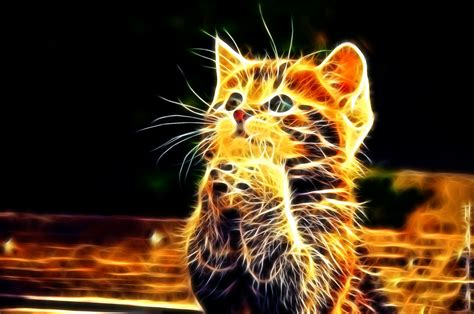 cat untuk wallpaper 3d wallpapers add an extra dimension to your desktop