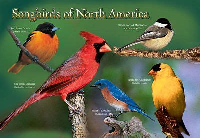 The Kids Backyard Store Songbird Photographic Gifts Amp Novelties Gifts To Promote