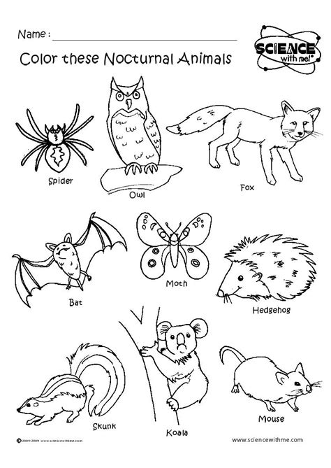 Free Coloring Pages Of Nocturnal Animals | diurnal animals coloring pages coloring pages