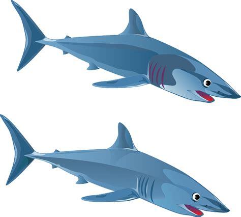 5 G Gelang Tulang Hiu contoh report text a shark ikan hiu