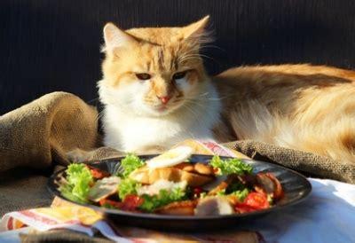 alimentazione adulto l alimentazione gatto cucciolo e adulto sterilizzato