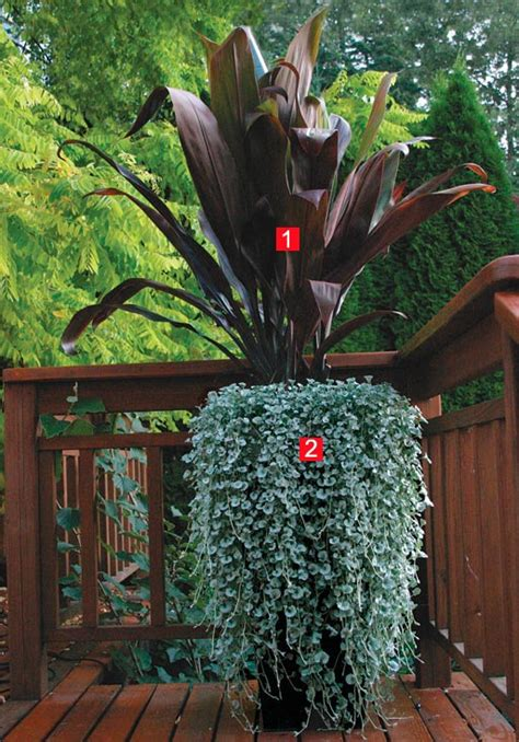 Patio Zone The Falls Stylish Shady Containers Gardening