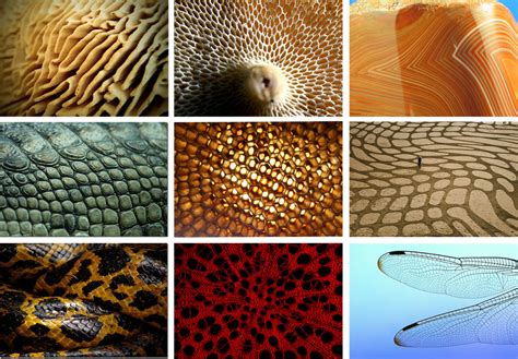 pattern of nature exles 1000 images about permaculture design on pinterest