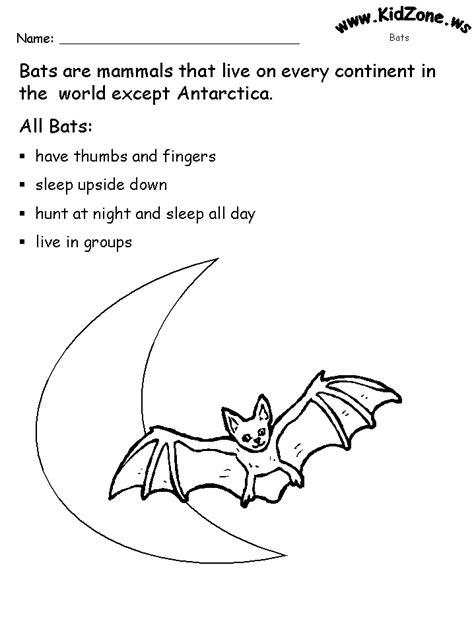 bat coloring pages preschool kindergarten bat activities bat activity sheets about