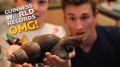 Biggest Snail in the WORLD // On The Road (Ep17) - YouTube