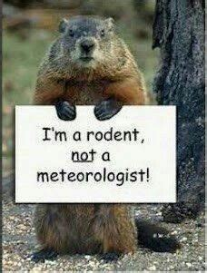 groundhog day quotes that step groundhog pictures free groundhog day wallpaper