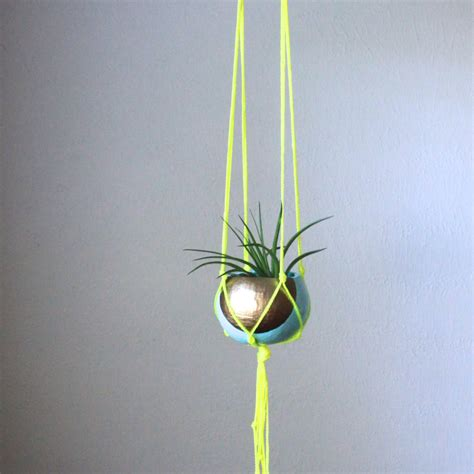 hanging air plant chandeliers pendant lights