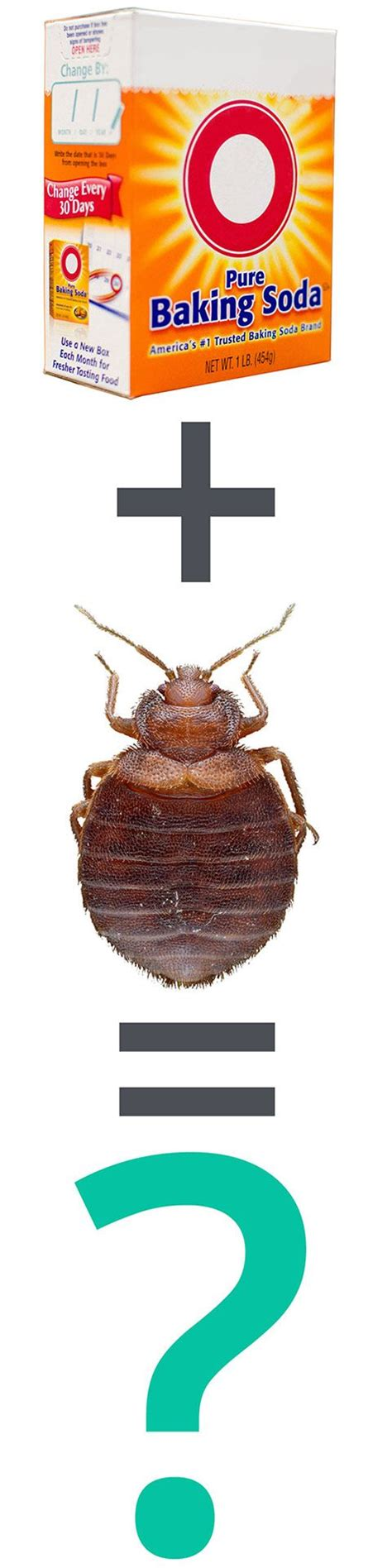 what can kill bed bugs 17 best images about bed bug treatments on pinterest