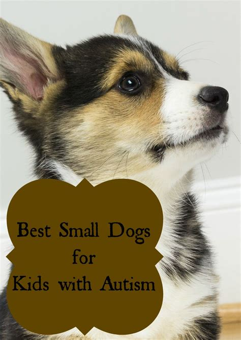 best dogs for best small dogs for with autism