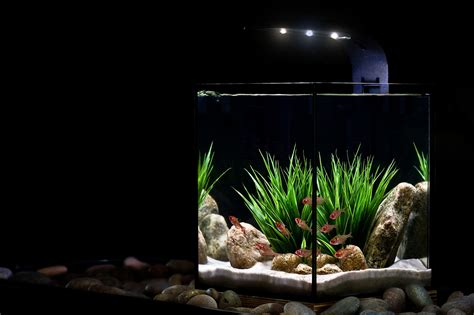 Desk Top Aquarium by Ecopico Desktop Aquarium From Ecoxotic Aquanerd