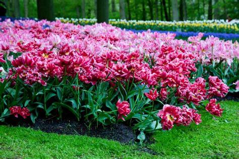 descargar imagenes de jardines gratis jard 237 n con rosas descargar fotos gratis