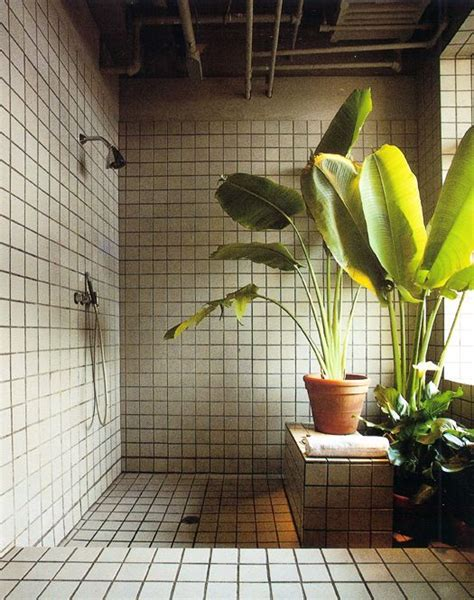 easy apartment plants 11 green plant bathrooms easy decor project idea for