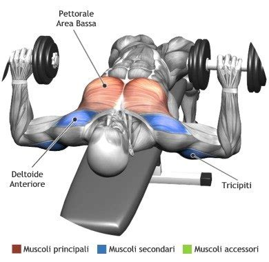 dumbbell bench press muscles worked mens chest workouts most effective chest workouts all