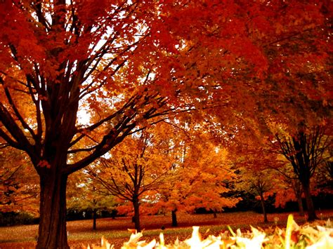 soul amp autumn tree photos in a drizzling rain in wisconsin and an autumn rain tune free