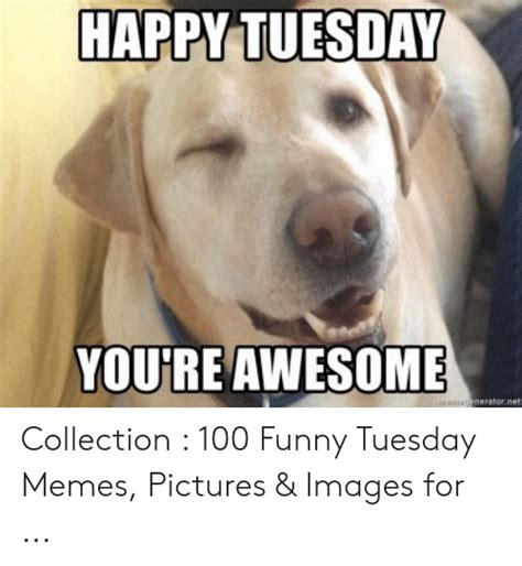 happy tuesday youre awesome maniegeneratornet collection