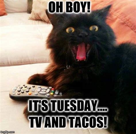 Meme Tuesday - oh boy cat taco tuesday imgflip