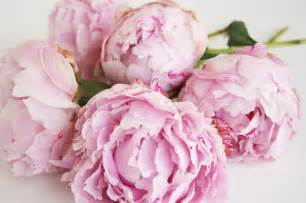 windmill farm roses peonies and snow ball plants are