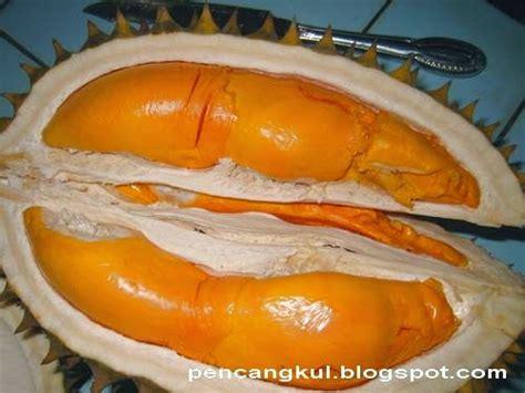 durian oranye varian menawan  wonosalam rumah ladang