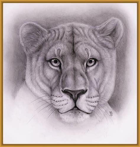 imagenes de leones reales para imprimir dibujos para colorear de leones reales archivos imagenes