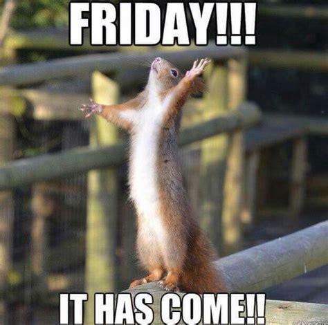Friday Meme Funny - friday squirrel meme memes pinterest squirrel meme