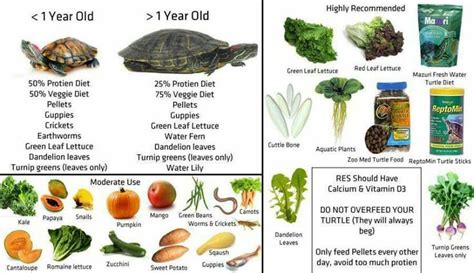 red eared slider healthy diet pets pinterest awesome pets and pandora