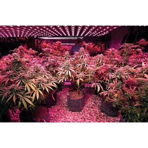 good lights for growing weed 20 best images about bud good light on pinterest