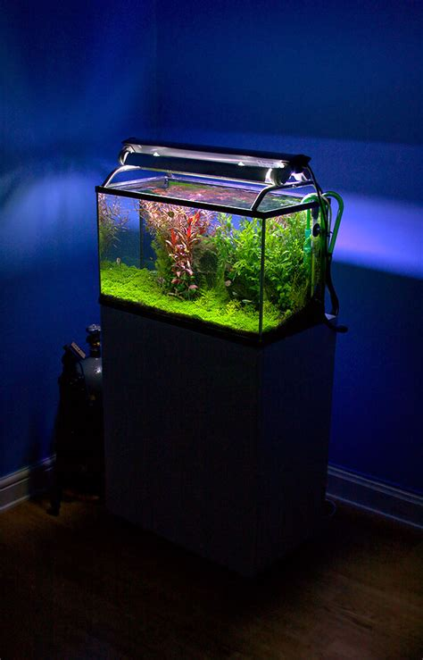 types of aquarium aquariums different types of aquariums