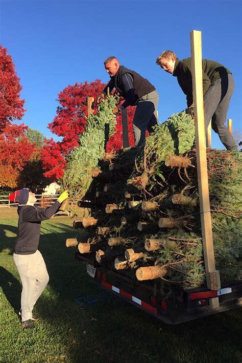 talbot optimist christmas tree sales begin life