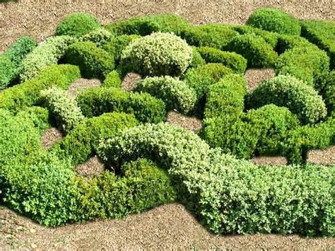knotengarten beispiele knotengarten