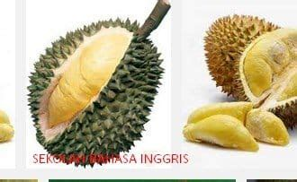 contoh report text  durian terlengkap artinya
