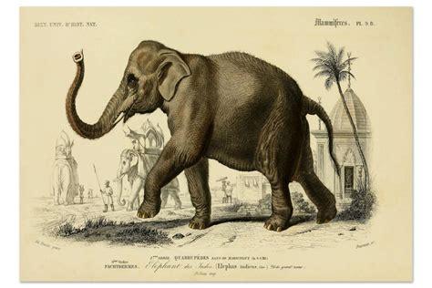 vintage printable animal best of etsy antique animal prints the neo trad