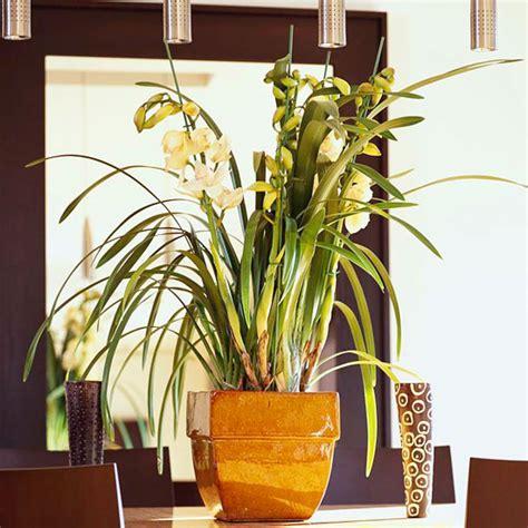 indoor plant lights