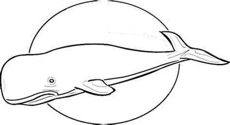 cachalot sperm whale coloring page supercoloring com