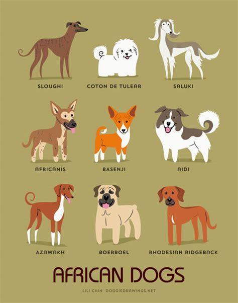 dogs   world  adorable dog breeds illustration
