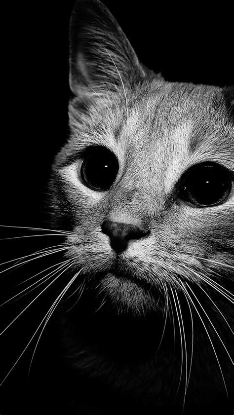 can cats see color or black and white black and white cat photography sincerely eyesofodysseus