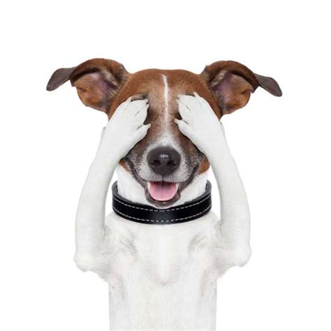 how do dogs see the world do dogs see in color science says yes top tips