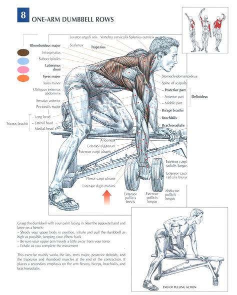 1000 images about workout fitness on curls