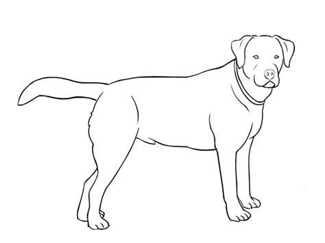 imagenes realistas para pintar dibujos de perros para colorear dibujos de razas de
