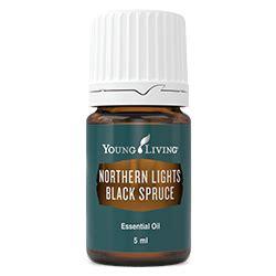 northern lights black spruce essential northern lights black spruce essential living