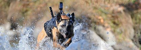combat dogs us war association national headquarters us war association national