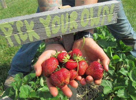 backyard farmer magazine 100 backyard farmer magazine recommended books for